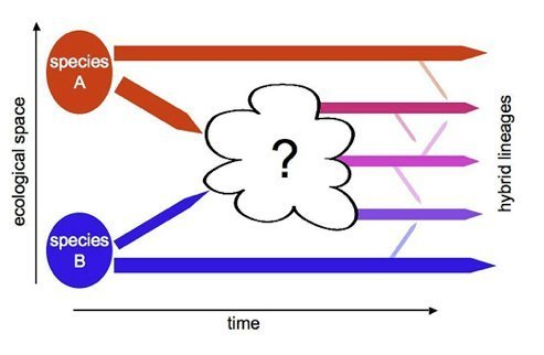 Hybrid speciation in Cottus   Max Planck Institute for ...