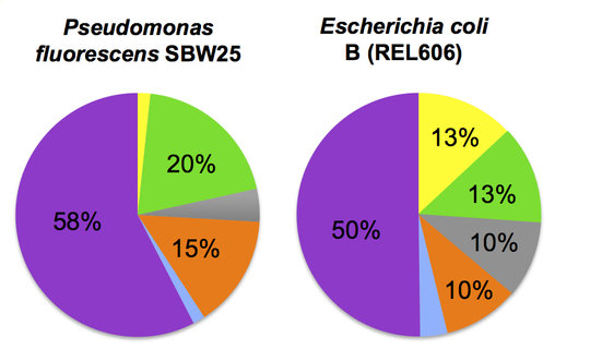 "<p align=""center""><strong>Figure 1. Biased and different use of the six leucine codons in the genomes of two bacterial species.</strong></p>"