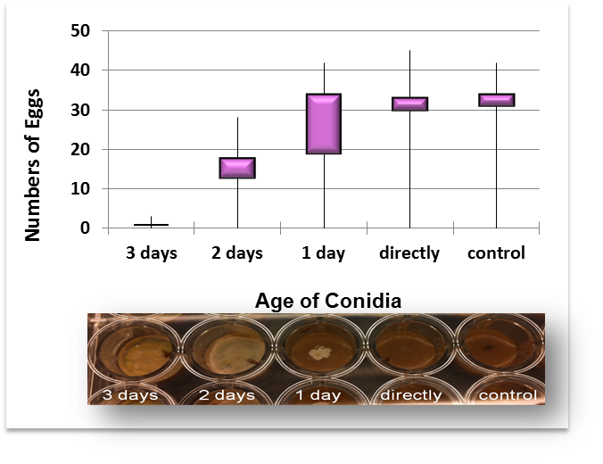 <strong>Fig. 2: </strong>Egg laying activity is negatively correlated with fungal colony size (box plot).