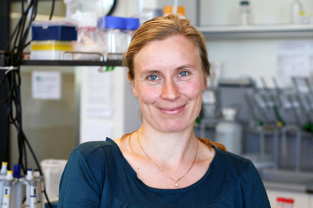 Eva Stukenbrock has again been awarded a renowned fellowship.The American Society for Microbiology recently elected the evolutionary biologist as a member of their scientific academy. Eva Stukenbrock received this award for her research on plant pahtogenic fungi.